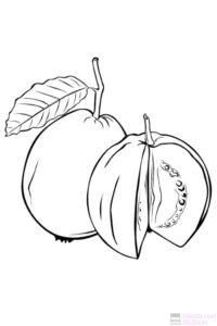 guayaba fruta fotos 1