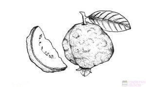 imagenes de dulce de guayaba 1