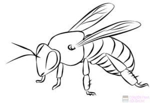 abeja para colorear