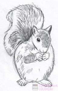 animales salvajes dibujos