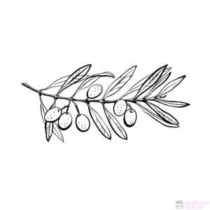 arbol de olivo dibujo