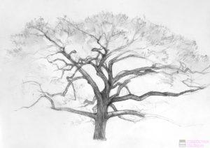 arbol frondoso dibujo