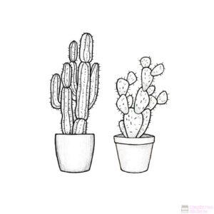 cactus fotos