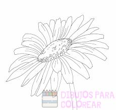 como dibujar margaritas