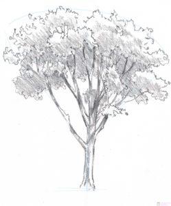 como dibujar una hoja de arbol