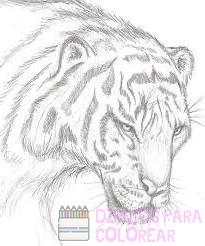 dibujos de animales lindos