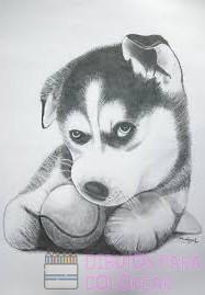 dibujos de animales para bebes