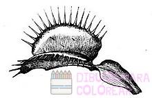 dibujos de carnivoros para colorear