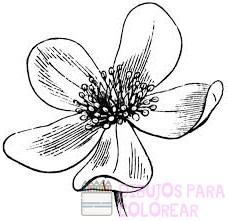 dibujos de orquideas a color