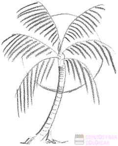 dibujos de palmeras a lapiz