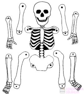 esqueleto humano dibujo para niños