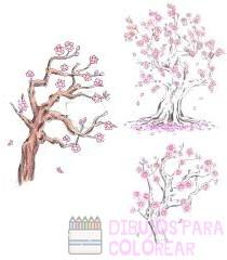 flor cerezo dibujo