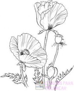 flor de amapola fotos