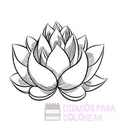 flor de loto dibujo a color
