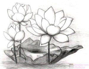 flor de loto para dibujar