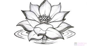 flor de loto simbolo
