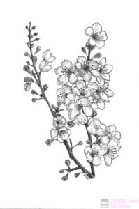flores de cerezo japon