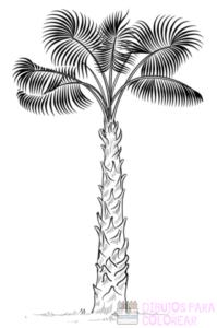 fondos de palmeras