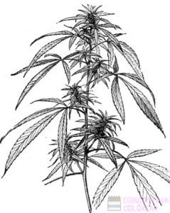 fotografias de plantas