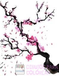 fotos cerezos en flor
