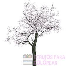 fotos de cerezos en flor de japon