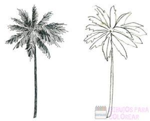 fotos de playas con palmeras