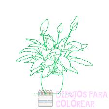 ilustraciones de plantas