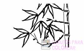 imagenes de cañas de bambu