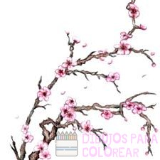imagenes de flor de cerezo japones