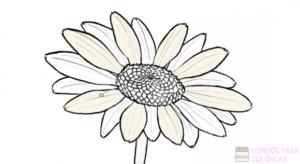 imagenes de margaritas blancas