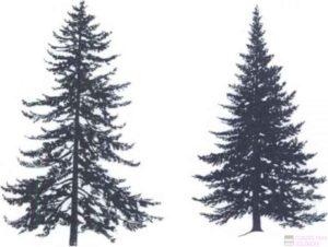 imagenes de pinos de navidad