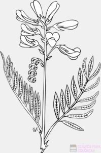 imagenes de plantas para dibujar