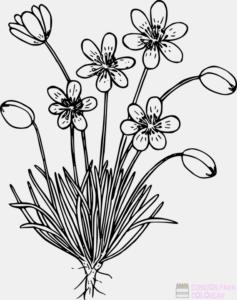 imagenes de plantas para niños
