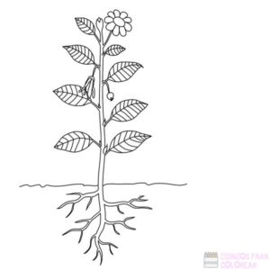 laminas de plantas