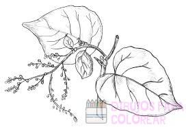 las plantas dibujos