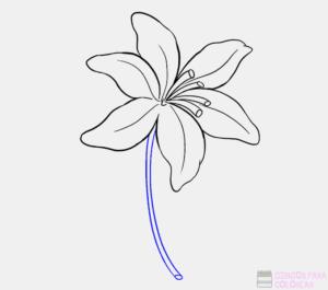 orquidea colombiana dibujo