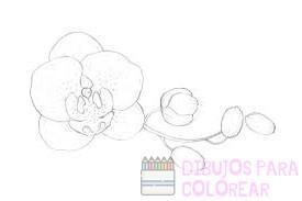 orquideas para pintar
