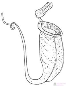 planta carnivora mosquitos