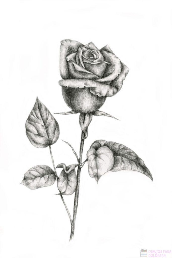 ᐈ Dibujos De Rosas 1000 Para Colorear Hoy