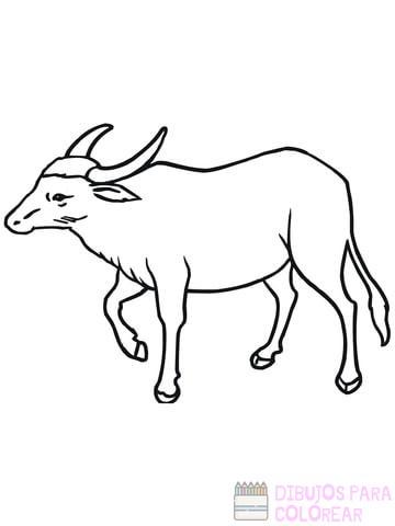 Bisonte Para Colorear
