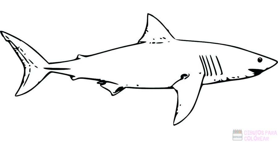 Tiburon Colorear